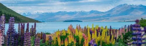 Panel Szklany Landscape at Lake Tekapo Lupin Field in New Zealand