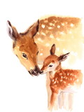Fototapety Mother and Baby Deer Watercolor Love Family Hand Painted Mother's Day Summer  Illustration isolated on white background