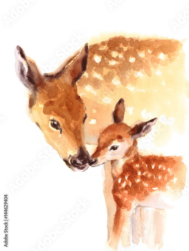 Mother and Baby Deer Watercolor Love Family Hand Painted Mother's Day Summer  Illustration isolated on white background