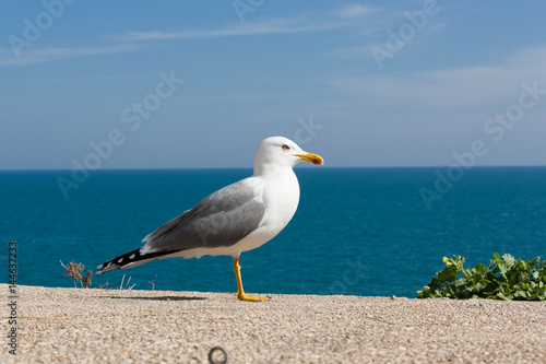 Graceful seagull bird posing on a blue sky and sea background.