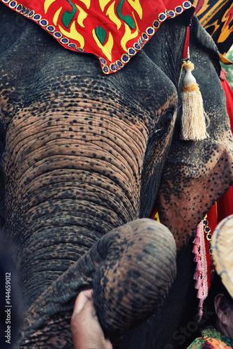 Poster Sad elephant