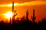 Desert sunset colection