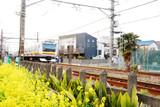 鉄道と菜の花