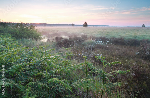 misty sunrise on swamp - 144692481