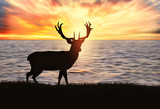 young deer on the beach at sunset