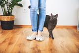 Süßes Kätzchen mit Frauchen