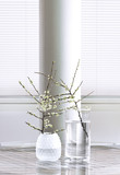 Cherry branches in glass vases.