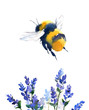 Bumblebee Flying Over Blue Flowers Watercolor  Hand Painted Summer Illustration isolated on white background