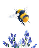 Bumblebee Flying Over Blue Flowers Watercolor  Hand Painted Summer Illustration isolated on white background - 144743423