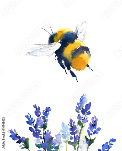 Fototapeta Bumblebee Flying Over Blue Flowers Watercolor Hand Painted Summer Illustration isolated on white background