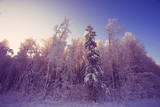 Winter landscape in the countryside forest snow field