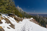 Snowy Mountaintrail along Snowcovered Evergreens and bright blue sky