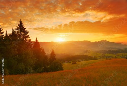 In de dag Ochtendgloren Forest edge