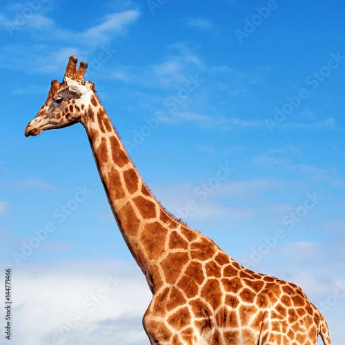 Poster Giraffe in the Sky