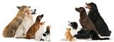 Hunde sehen nach oben - 144772286