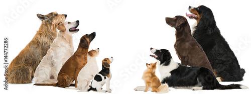 Papiers peints Photos panoramiques Hunde sehen nach oben