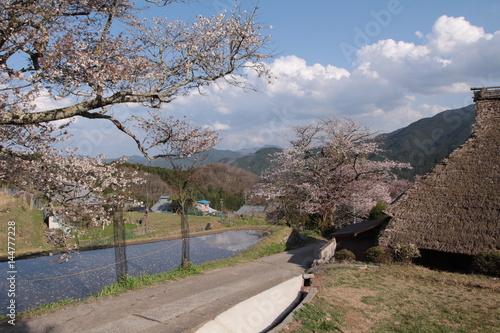 三多気の桜 Poster