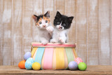 Cute Pair of Kittens Inside an Easter Basket