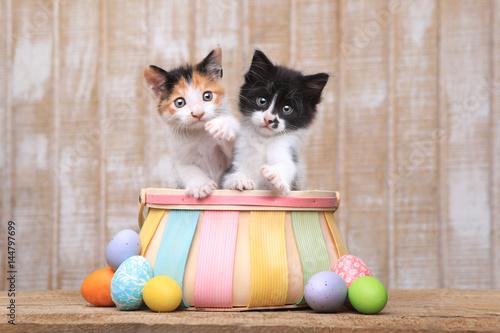 Cute Pair of Kittens Inside an Easter Basket
