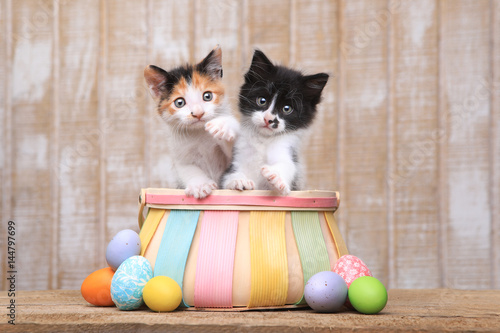 Poster Cute Pair of Kittens Inside an Easter Basket