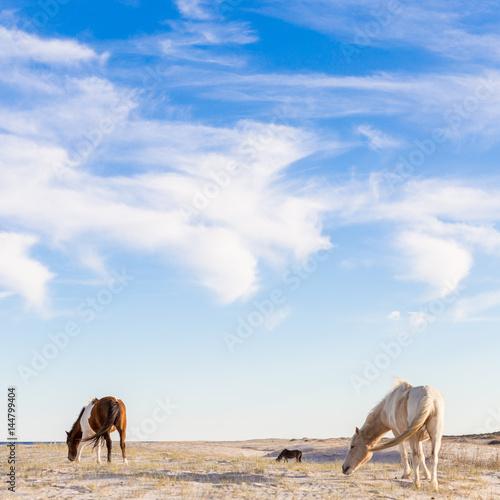 Wild horses on the beach. - 144799404
