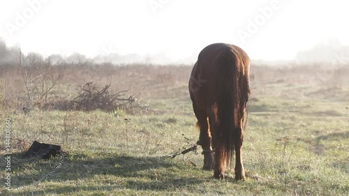 The horse is grazing in the meadow at dawn in the spring © makam1969