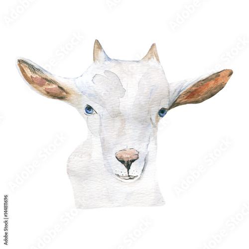 goat. animal, watercolor. - 144811696