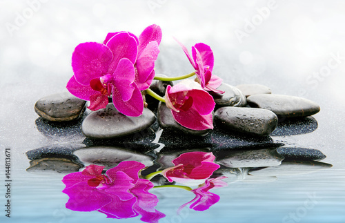 Pnk orchids and black stones close up. - 144813671