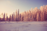frosty winter morning landscape nature sunny