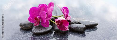 Pnk orchidee i czarne kamienie z bliska.