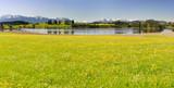 Panorama Landschaft mit Blumenwiesen im Frühling im Allgäu bei Füssen