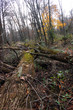 Fallen trees in the forest