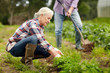 senior couple working in garden or at summer farm