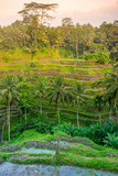 Tegallalang Rice Terraces in Ubud, Bali, Indonesia
