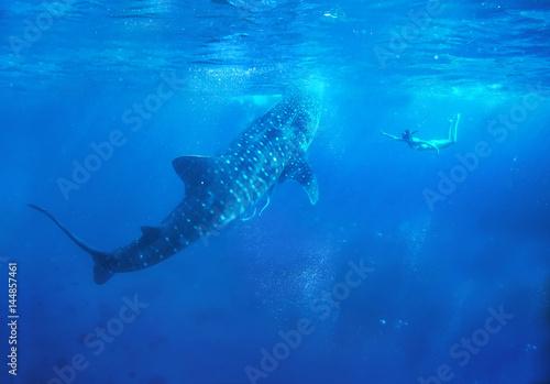 Fototapeta Woman snorkeling with while shark