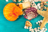 Shells and pebbles on vibrant turquoise with copyspace - 144866429