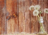 Dandelions on a wooden background