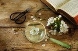 Botany, cherry blossom, scissors, magnifying glass and a book on the determination of plants on a rustic vintage wooden table, science concept
