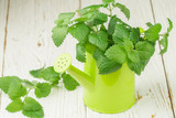 Organic Melissa. Sprigs of fresh lemon balm in a decorative vase. Spicy greens. Selective focus - 144882280