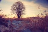 frosty winter morning landscape nature sunny