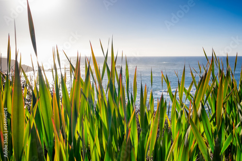 Pacific Ocean seascape viewed through wild iris plants growing in the foreground Poster