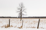 Winter Trees in the countryside of Canada