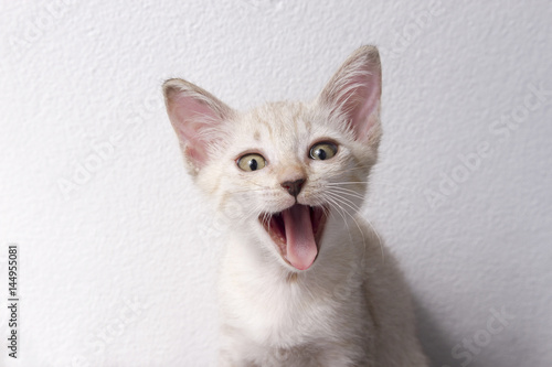 Cute cat sit isolated white background, Funny pet.