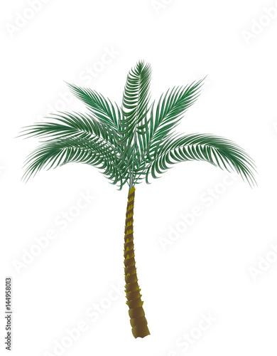 tropische-grune-palme-getrennt-auf-weisem-hintergrund-illustration