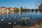 Prague. Image of Charles Bridge in Prague with swans in the foreground.