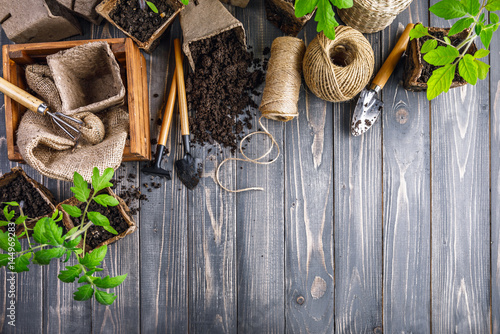 Garden tools with pot and soil seedlings tomato on wooden board Poster