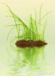 îlot de terre avec herbes, inondation, montée des eaux,