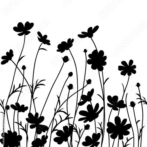Summer garden. Cosmos flower silhouette isolated on white. Vector illustration
