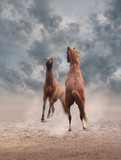 Horses fight standing on hind legs