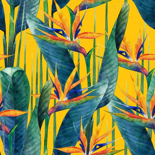Fototapeta Watercolor strelitzia pattern